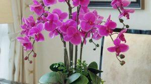 Plante care atrag linistea, iubire, bunăstare și bogăție în casă și la locul de munca