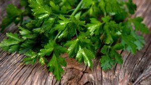 CURA MIRACULOASĂ – Ce se întâmplă dacă mănânci zilnic pătrunjel