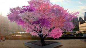 POMUL MINUNE: Face 40 de fructe diferite si infloreste in culori magice!