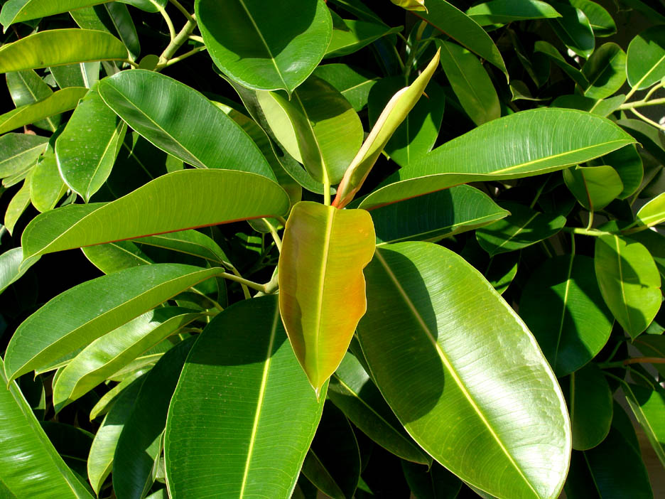 Plante decorative care pot aduce ghinion acasă