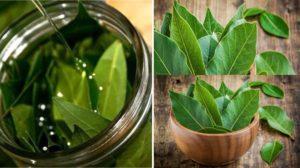 Cinci boli pe care le puteți trata cu frunze de dafin. Leac de mii de ani pentru varice