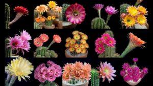 Plantele astea atrag energia pozitivă şi te fac mai fericită