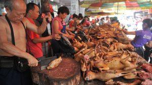 Festivalul cărnii de câine declarat ilegal în China. Imagini