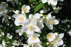 Trei plante banale, miraculoase pentru circulaţie: remedii naturale care ţin arterele suple