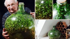 Grădină într-o damigeană, neudată de 50 de ani