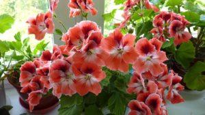 A adăugat această soluţie în ghivecele cu flori şi s-a întâmplat o minune