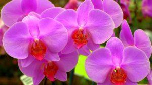 Îngrijirea orhideelor: cele mai frecvente probleme și soluții