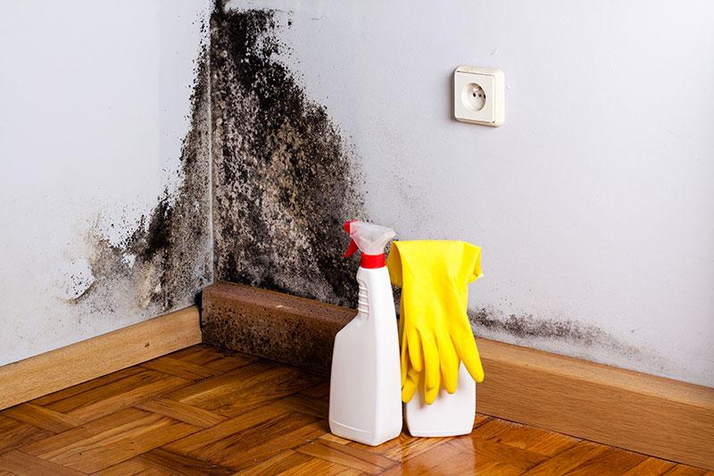 Scapă de mucegai fără chimicale. Rețeta de casă care te va ajuta!