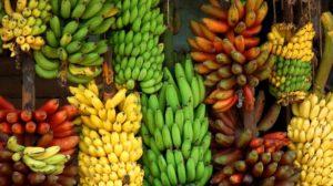 Bananele si beneficiile acestora