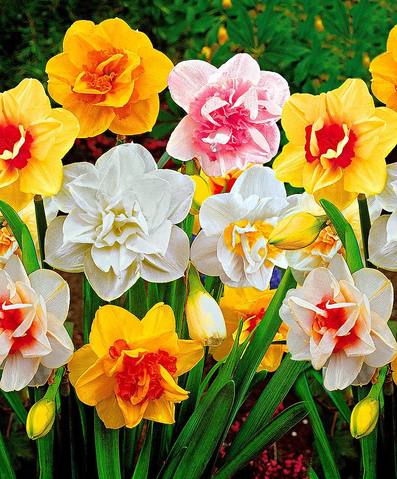 Florile din casă despre care nu ştiai că sunt periculoase