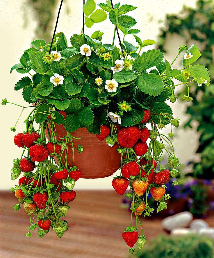 Legume, fructe  și verdețuri care pot fi ușor crescute acasă