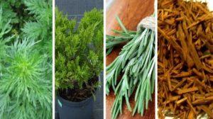 Vrei sa-ti umpli casa cu energii pozitive ? Arde una din aceste plante si sporul revine in casa ta, iar problemele incep sa dispara