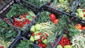 Adio chimicale! 7 tratamente bio pentru cultura de legume