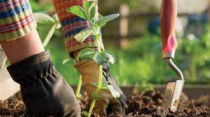 Trucuri pentru gradinarit foarte eficiente pentru indepartarea daunatorilor, prevenirea bolilor si imbunatatirea calitatii solului
