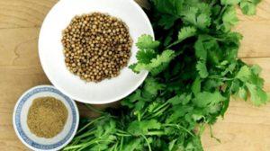 Coriandrul – beneficii, proprietăți și utilizări. Are efecte vindecătoare asupra ficatului, pancreasului şi rinichilor! Reduce infectiile tractului urinar