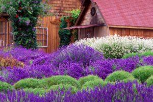 Aceste plante te vor ajuta să scapi de tânţari!