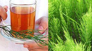 Daca ai trecut de 40 de ani ar trebui sa bei acest ceai in mod regulat !