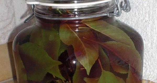 Ceaiul din frunze de cires amar: lotiunea magica ce poate distruge pietrele de la rinichi si care trateaza hepatitei A
