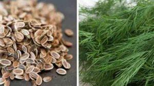 Fierbeți o lingură de semințe de mărar sau de frunze proaspete și aflați ce efecte uimitoare are asupra organismului!