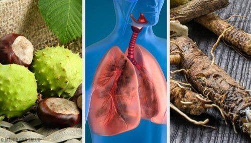 Iată 4 remedii naturale care întăresc plămânii