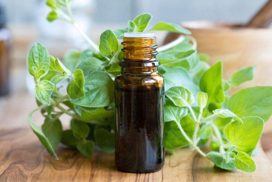 Uleiul de oregano este cel mai eficient antibiotic existent