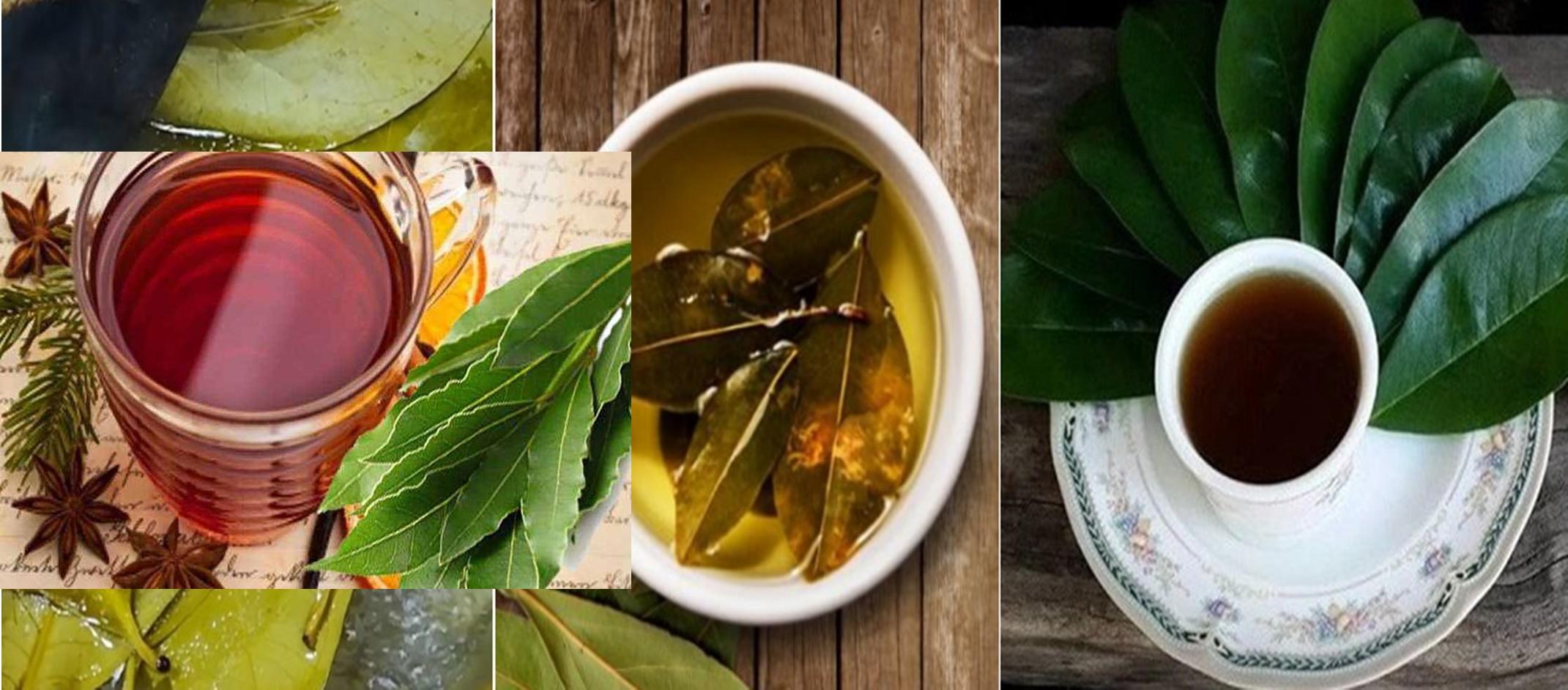 Tinctura din frunze de dafin reduce glicemia, calculi renali și îmbunătățește tensiunia arterială, sănătatea musculară și a articulațiilor