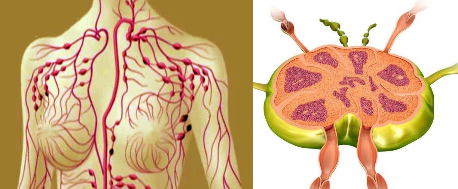 Limfa se numește apa vie a corpului. Acesta circulă prin canalele limfatice, spălând întregul corp.10 moduri ușoare de a vă curăța sistemul limfatic. Doar remedii naturale