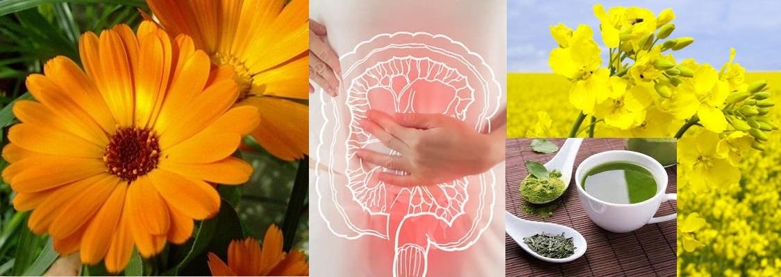Cele mai eficiente plante în terapia cancerului de colon. Rapiţa şi ceaiul verde au efect de protecţie contra cancerului