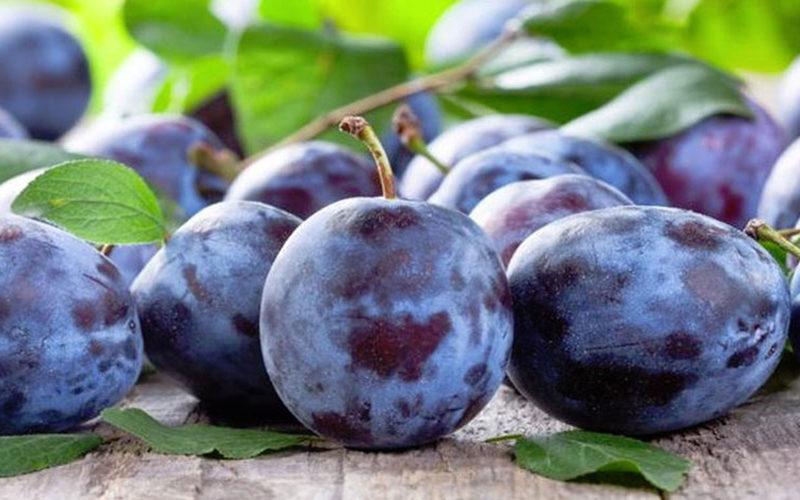 Un studiu german arata ca prunele pot combate o afectinue care poate ucide milioane de oameni