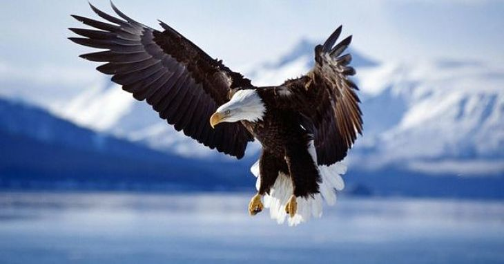 Pilda vulturului care te va pune pe ganduri
