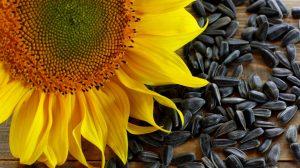Semințele de floarea soarelui – desfundă vasele de sânge, curăță colonul și hrănesc creierul