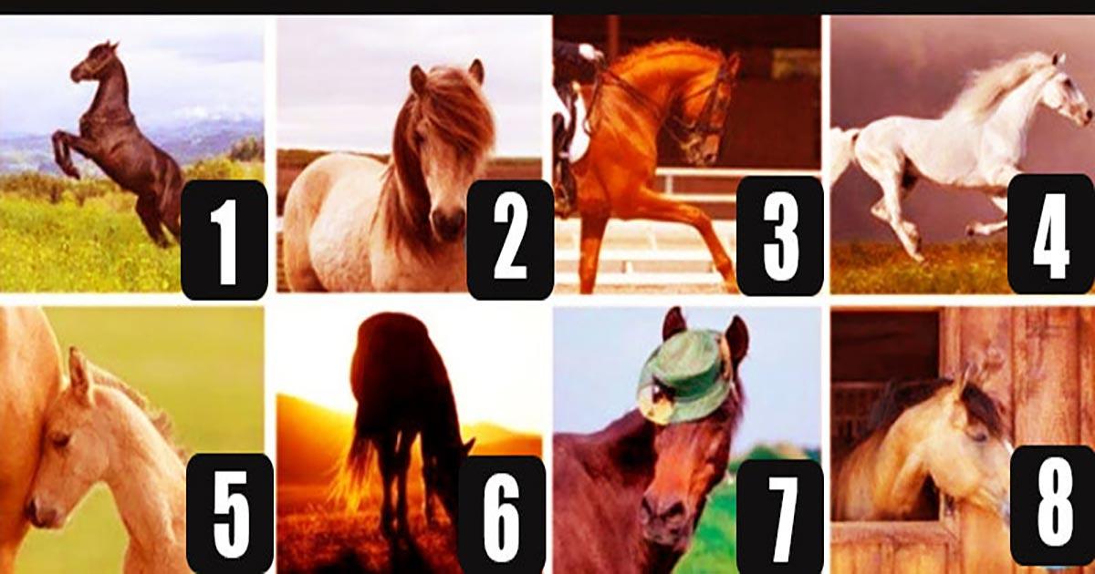 Privește ATENT imaginile, alege unul dintre toți acești cai și află ce tip de PERSONALITATE ești!