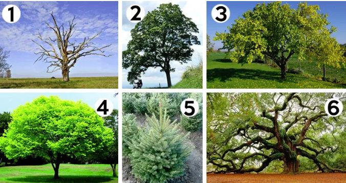 Alege copacul care iti place si afla ce se ascunde in sufletul tau