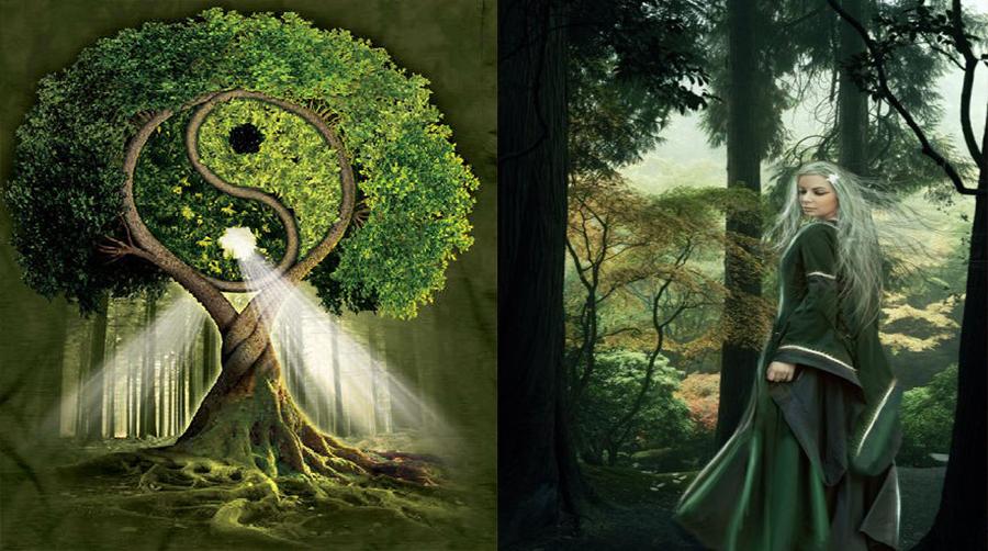 Copacul care iti ocroteste zodia – Puterile pe care le mostenesti