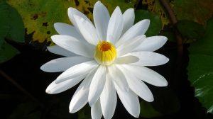 O plantă magică, cu beneficii inedite!