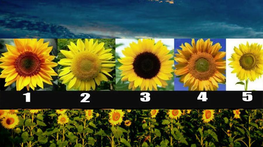 Alege o floare a soarelui și află cât de bun e sufletul tău
