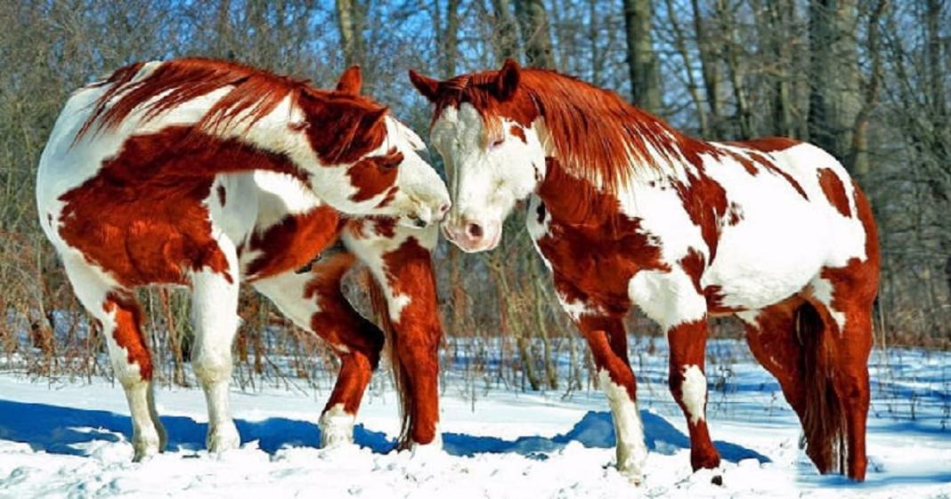 Frumusetea lor te va lasa masca! 10 cai care sunt cei mai frumosi de pe planeta!