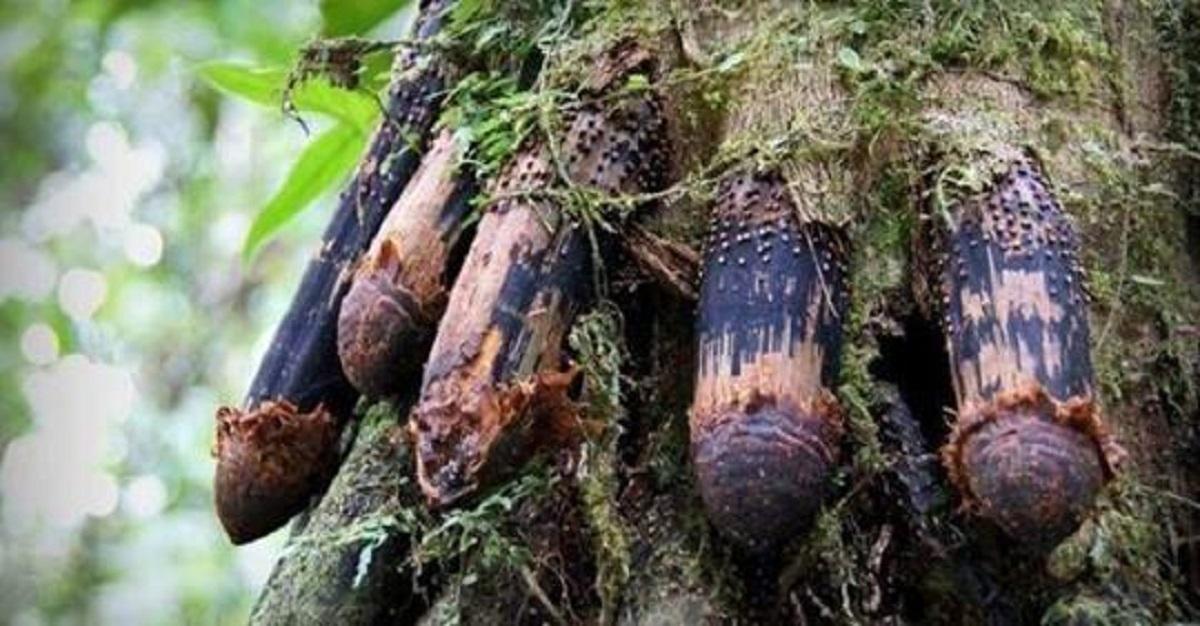 Imagini incredibile ale celor mai frumoși și ciudați copaci de pe planetă!