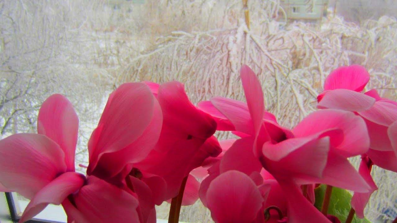 Apa oxigenată — un balsam pentru plantele de cameră în perioada rece a anului!