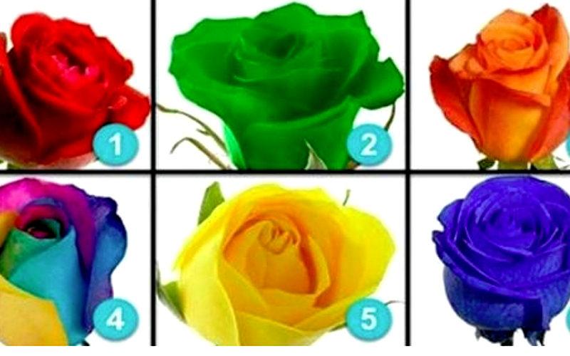 Secretele destinului tau sunt scrise printre petalele trandafirilor, alege trandafirul care te defineste
