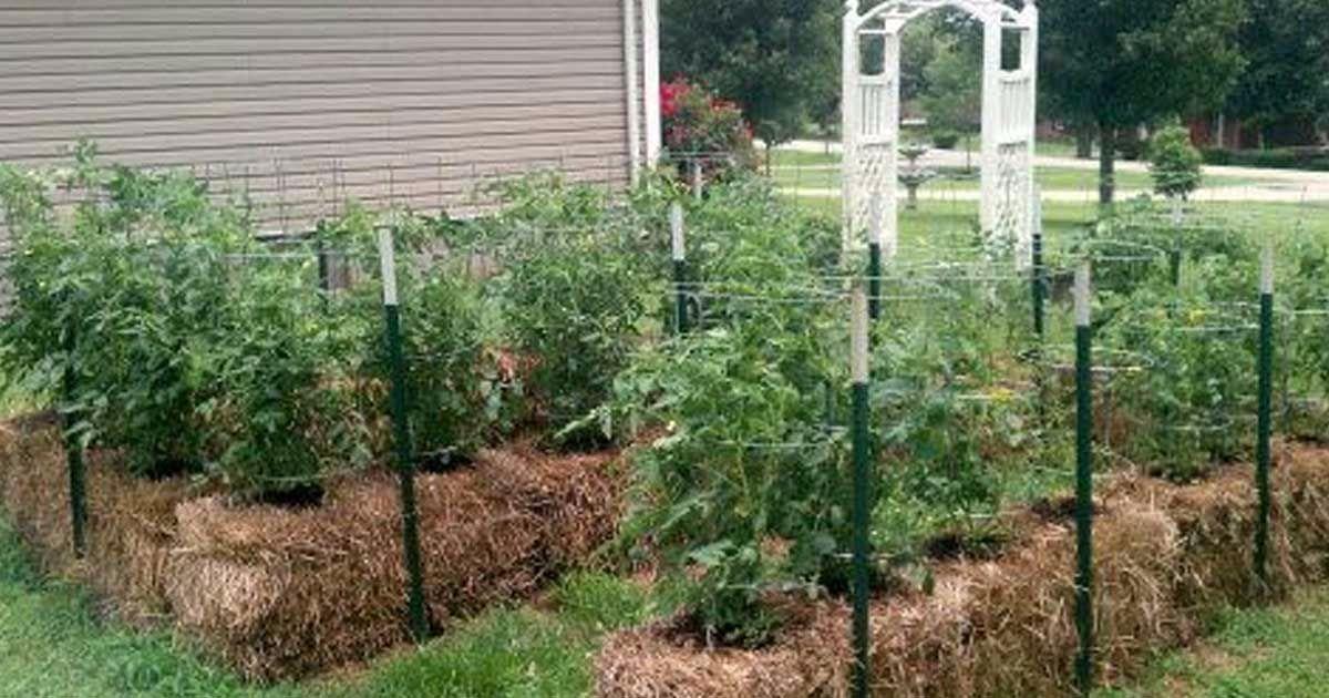 Știați că puteți să cultivați plantele și fără sol? 4 sfaturi despre grădinăritul pe baloturi de paie, pe care mulți oameni nu le cunosc!