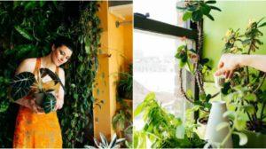 Rețeta celui mai natural îngrășământ pentru plante