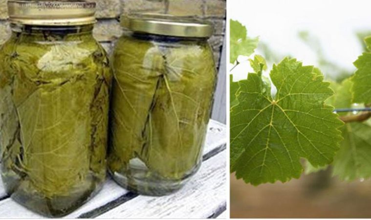 Frunze de vita-de-vie – Sareaza-le si pune-le in borcan, le vei folosi tot anul