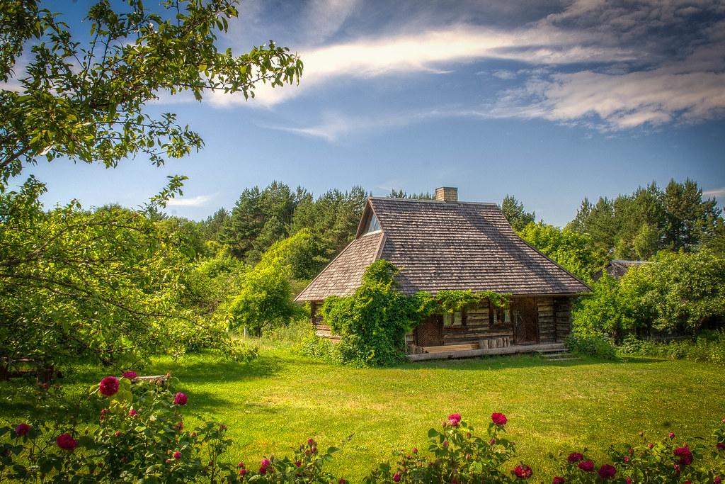 Copaci care merită plantați pe lângă casă, aduc bunastare în casa