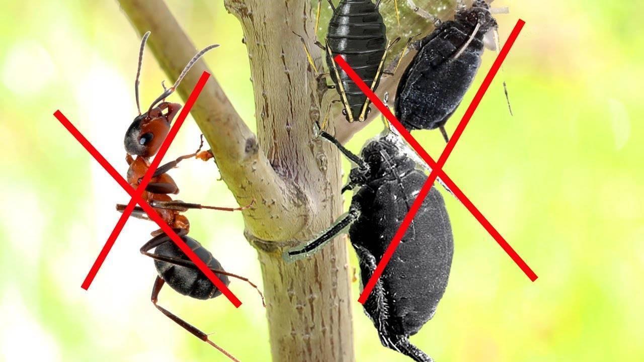 Scapă de țânțari, muște și furnici într-un mod natural și fără a cheltui niciun leu!