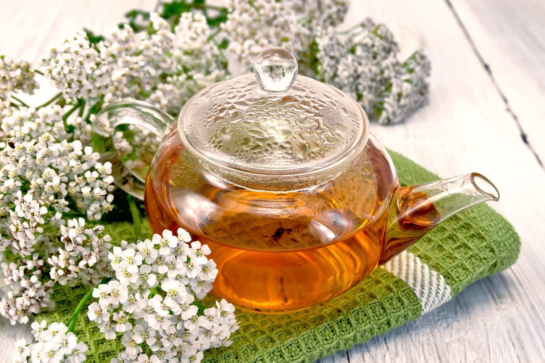 Cum sa folosiți ceaiul din coada soricelului si ce afectiuni trateaza… ginecologice, hepatice, ulcer, migrene, hemoroizi…