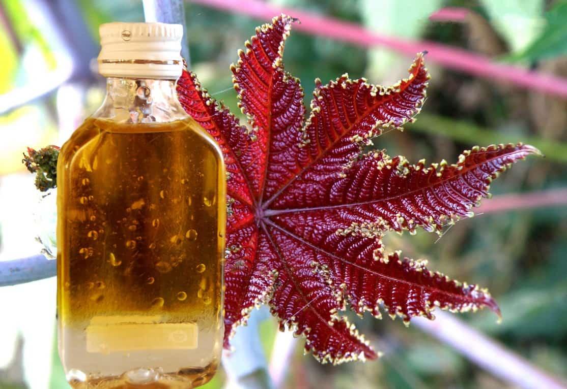 14 moduri de utilizare a uleiului de ricin acasă